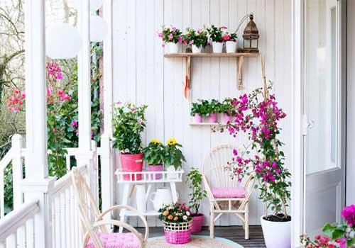 گلهای آپارتمانی در تراس