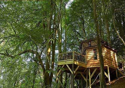 خانهی درختی