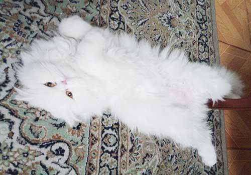 گربهای مغرور با قلبی مهربان