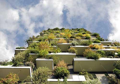 پشت بام سبز