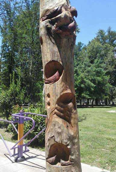 کنده کاری روی درختان پوسیده