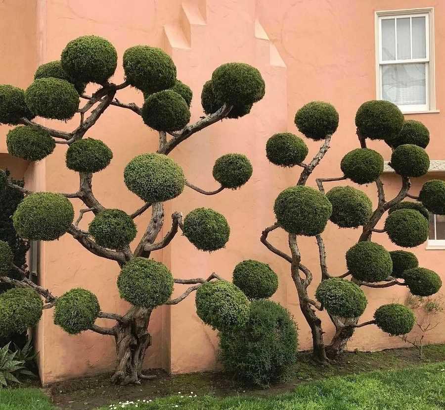 درخت آرایی
