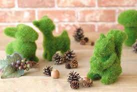 کاشت سبزی عید با خاکشیر