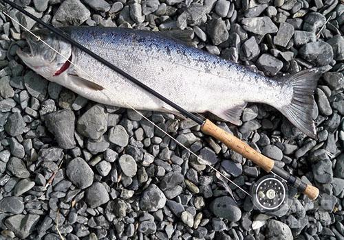 ماهی سالمون یکی از غذاهای مفید برای استخوان