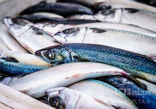 ماهی برای تقویت بینایی