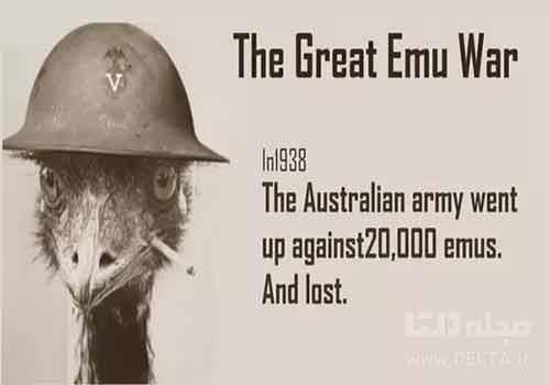 جنگ شتر مرغ