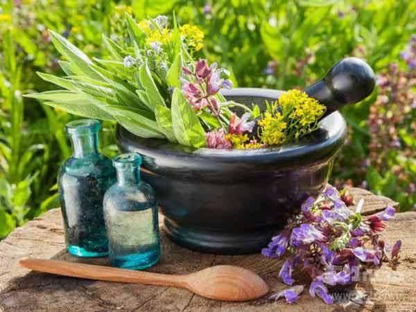 بهترین گیاهان دارویی برای تقویت حافظه