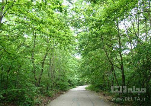 درختان جنگل سراوان