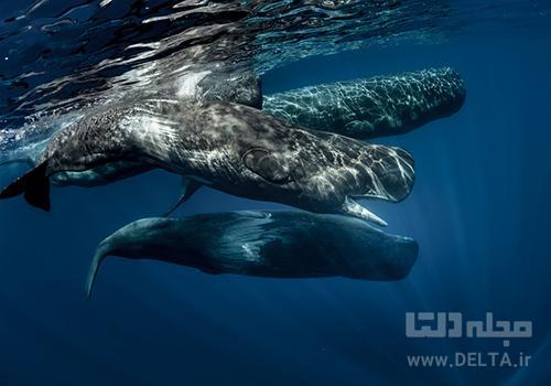 مشاهده نهنگ ها در آزور پرتغال