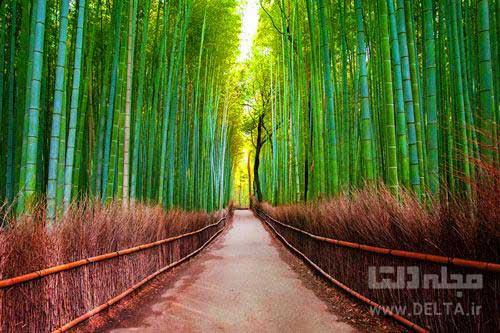 جنگل-درماني
