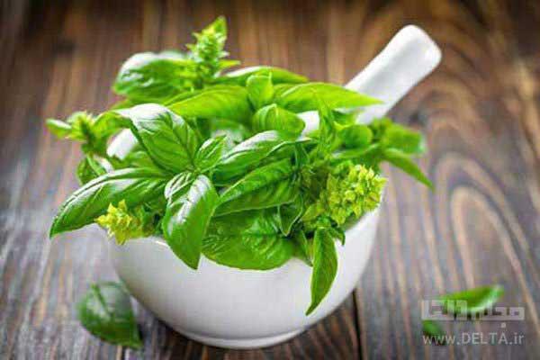 سبزی-ریحان