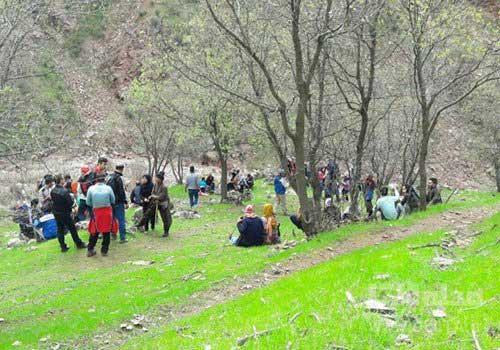 پیک نیک در دره