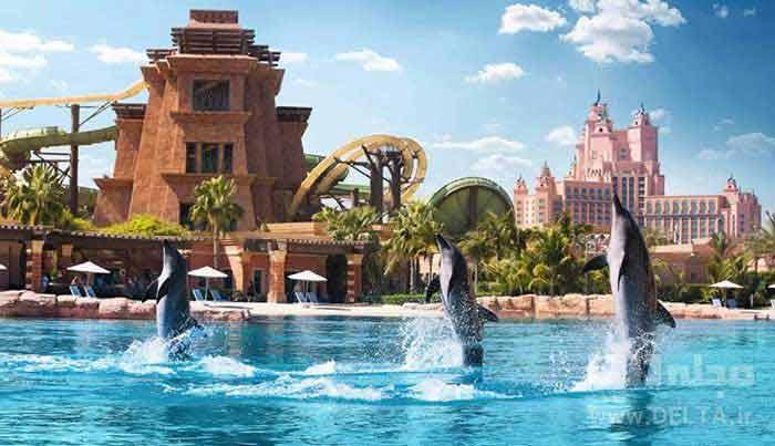 سرزمین دلفین های دبی