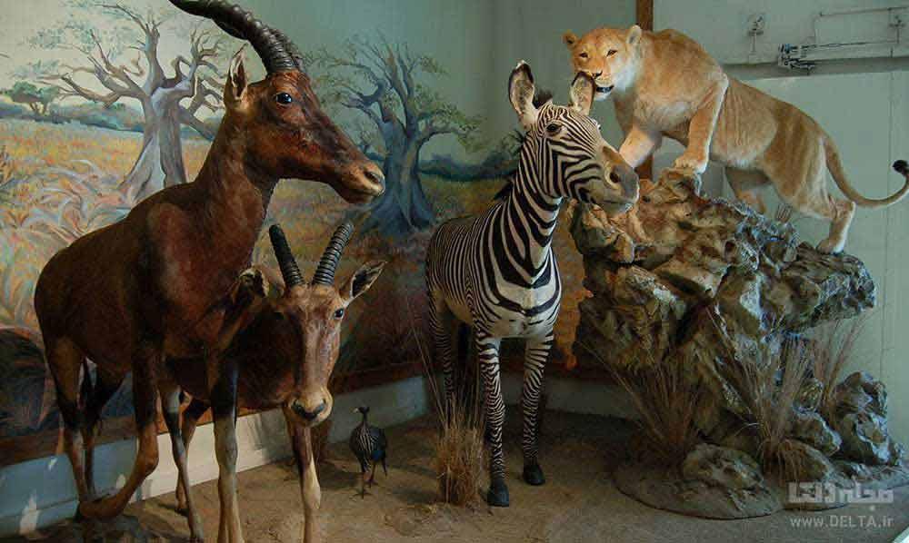 موزه دارآباد