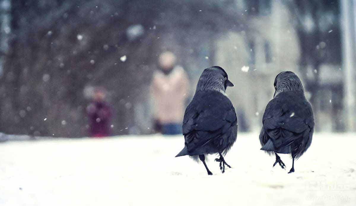 روز برفی خیابان سی تیر