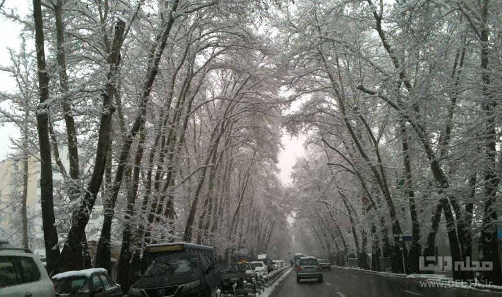 خیابان ولیعصر برفی