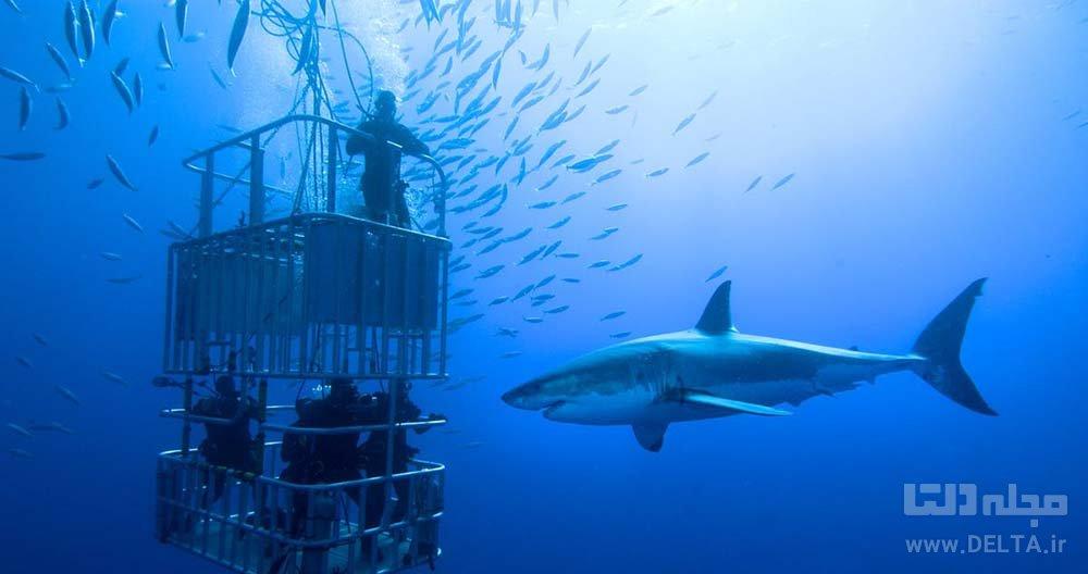 خون خوارترین موجودات دریا