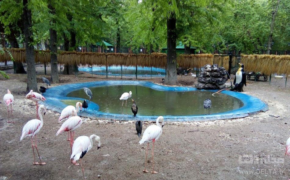 با پرندگان پارک شهر