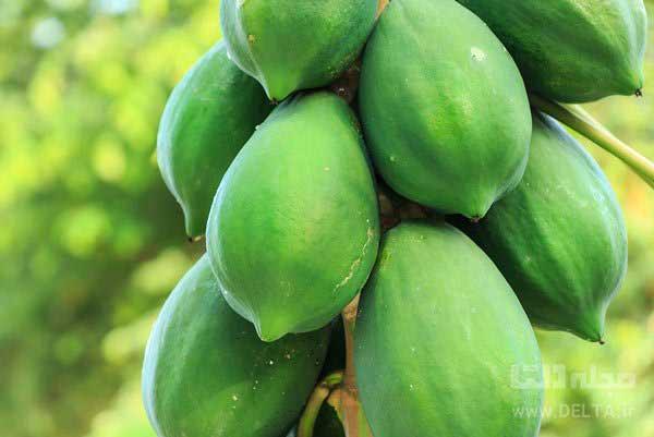 میوه-پاپایا