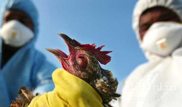 آنفولانزای پرندگان