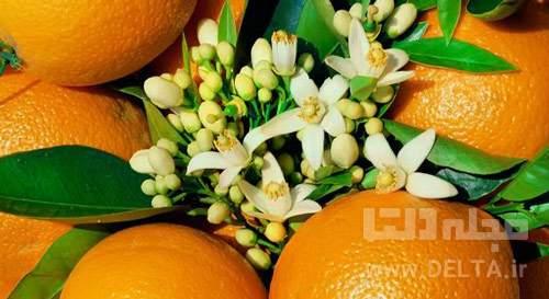 خواص-بهار-نارنج