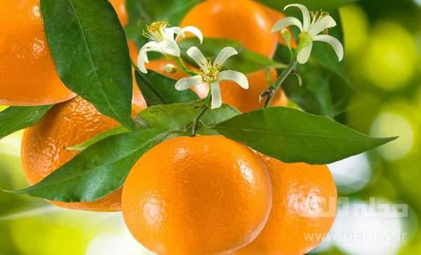 بهار نارنج چيست