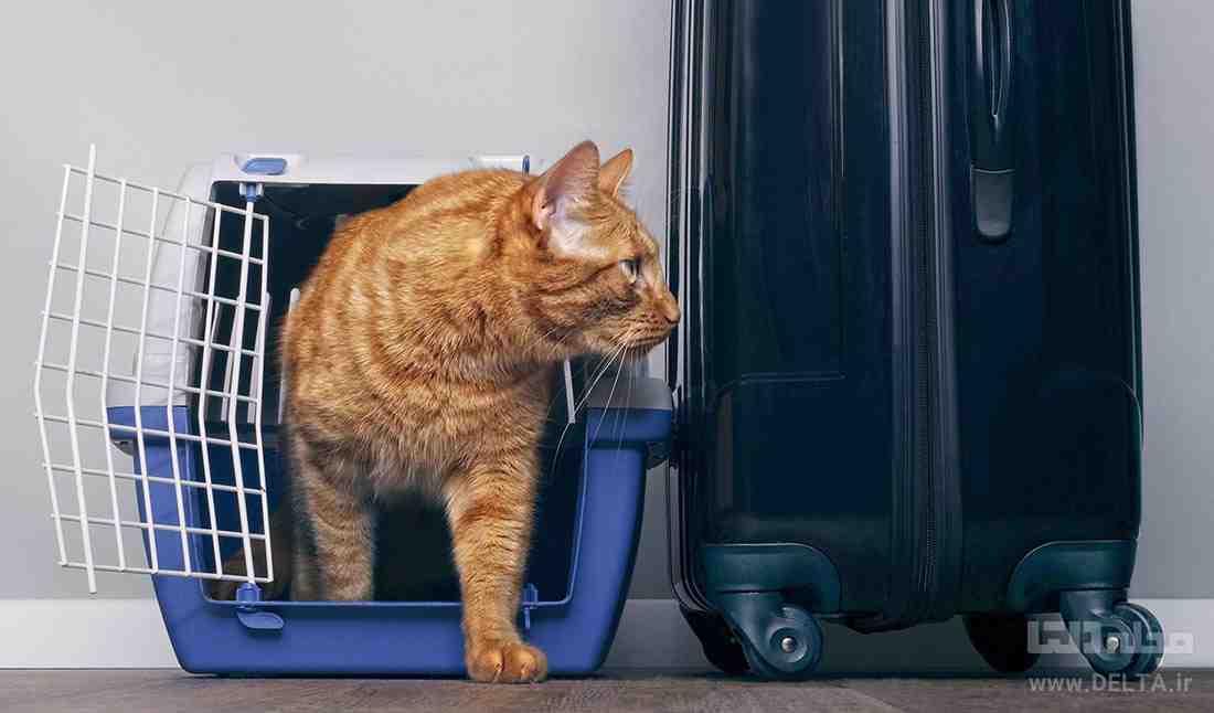 حمل حیوان با هواپیما