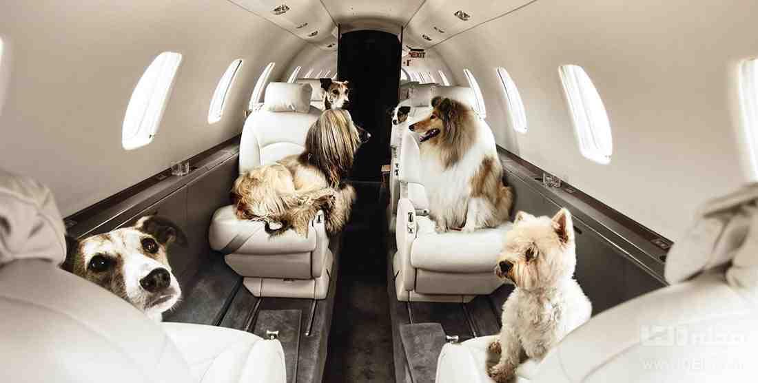 ارسال حیوانات با هواپیما