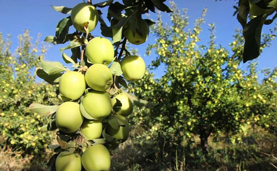 باغ های سیب اصفهان