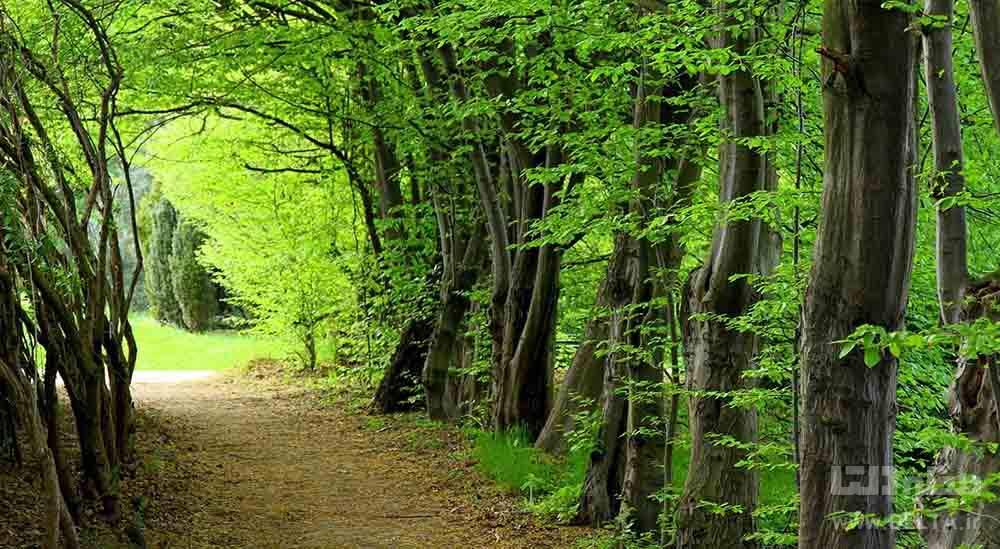 جنگل سی سنگان مازندران