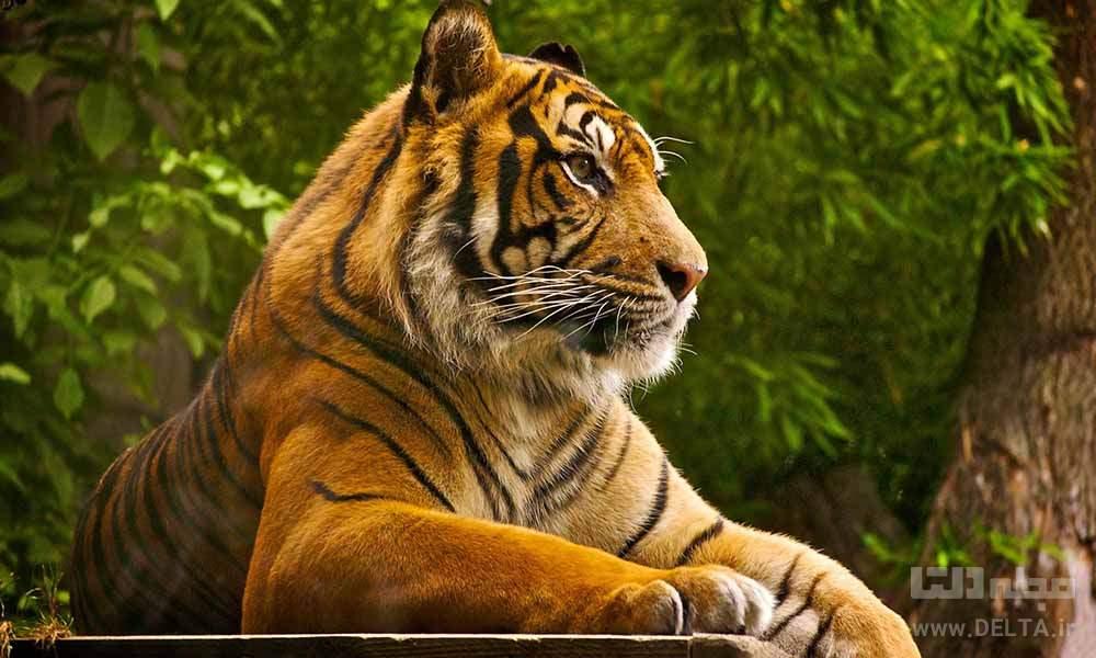 پارک ملی جانور شناسی دیدنی دهلی National Zoological Park