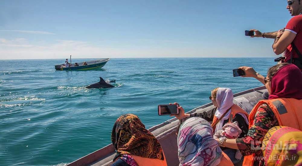 دلفین های خلیج فارس