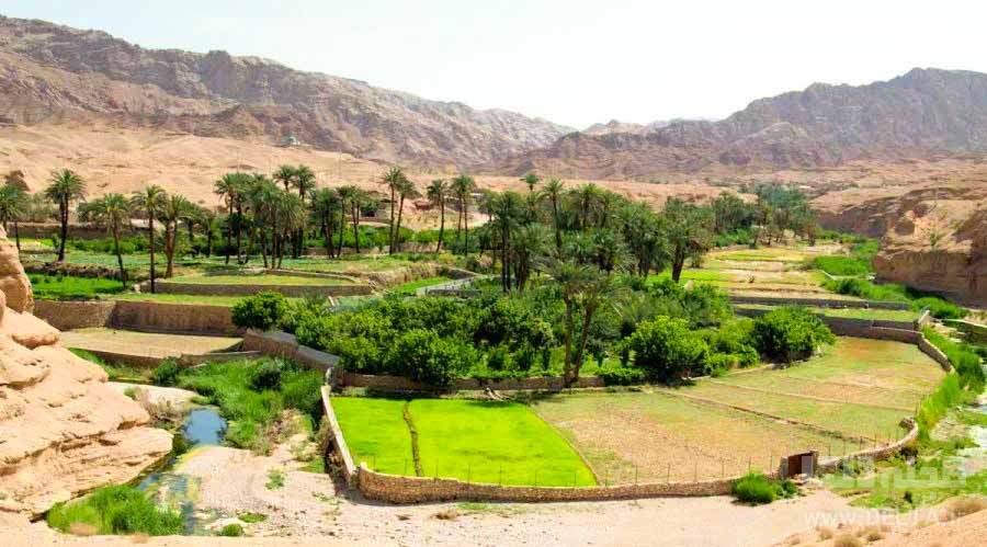 نخلستان روستای کویر خور اصفهان