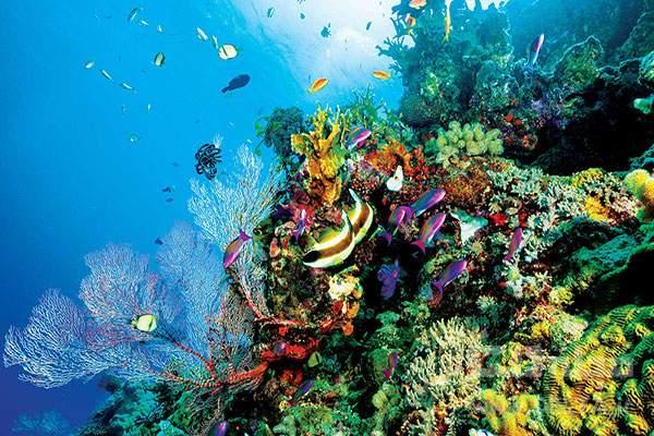 دیواره بزرگ مرجانی استرالیا