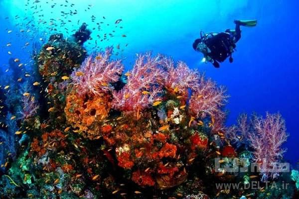 غواصی ساحل مرجان