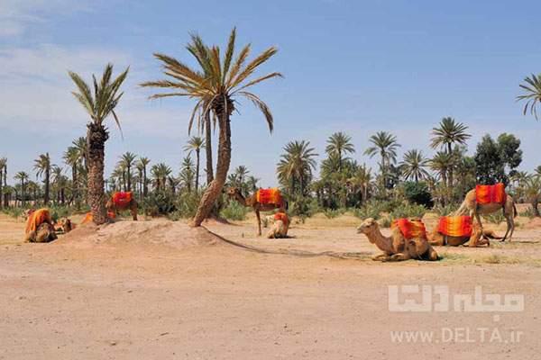 جاهای دیدنی مراکش