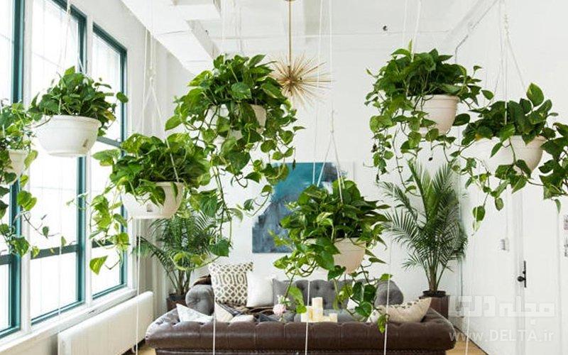 گیاهان آویزی