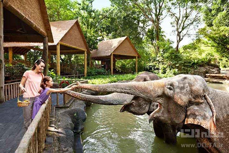 باغ وحش سنگاپور ديدني هاي سنگاپور