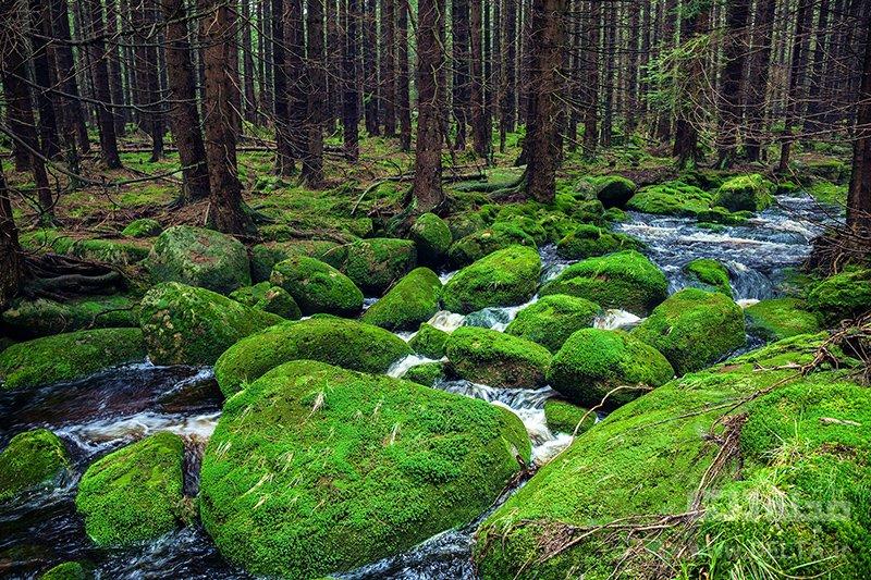 جنگل سیاه جاذبه های گردشگری آلمان