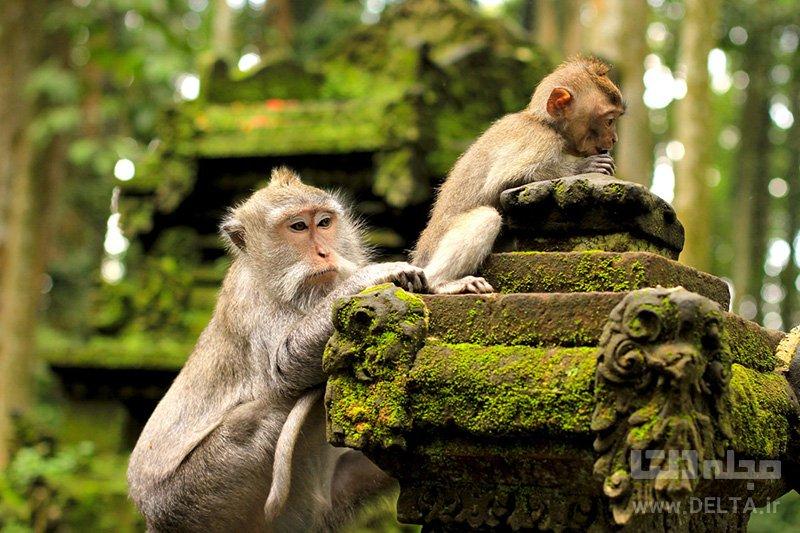 جنگل میمونها
