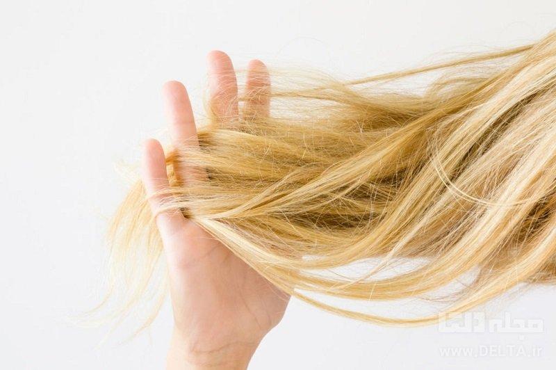 مواد غذایی برای پرپشت شدن مو