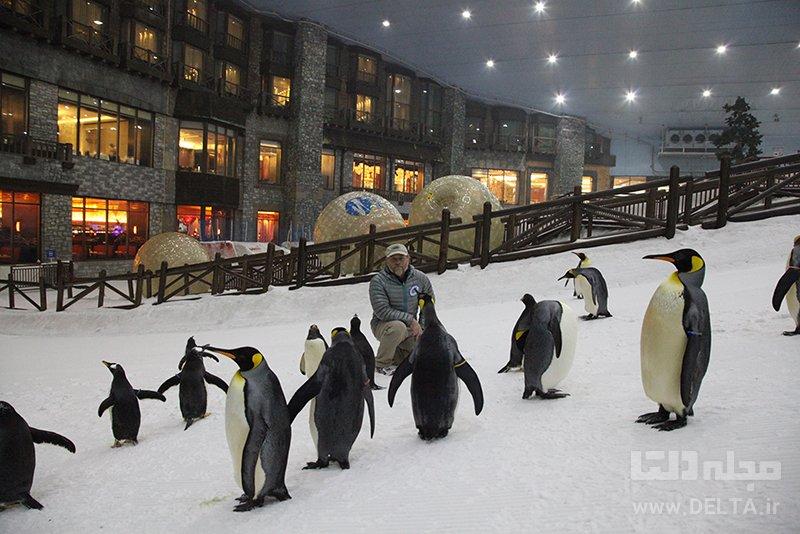 پنگوئنها در اسکی دبی