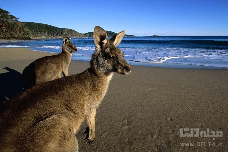 جزیره کانگورو جاذبه های استرالیا