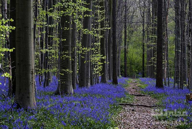 جنگل سونیان جاذبههای بلژیک