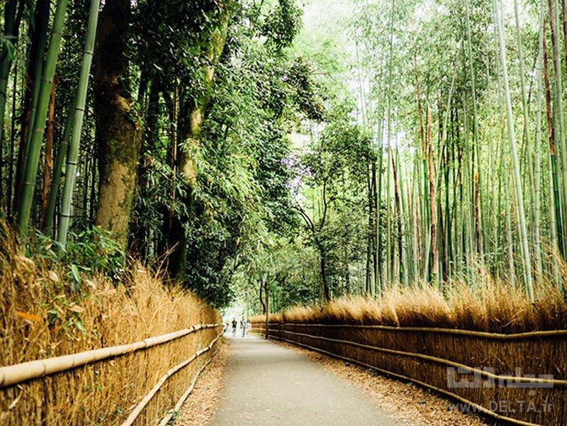جنگل بامبو، ژاپن جاذبه های گردشگری عجیب دنیا