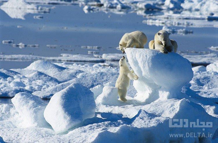 دریای یخزده (Sea Ice)، اسپیتسبرگن، سوالبارد جاذبه های گردشگری عجیب دنیا