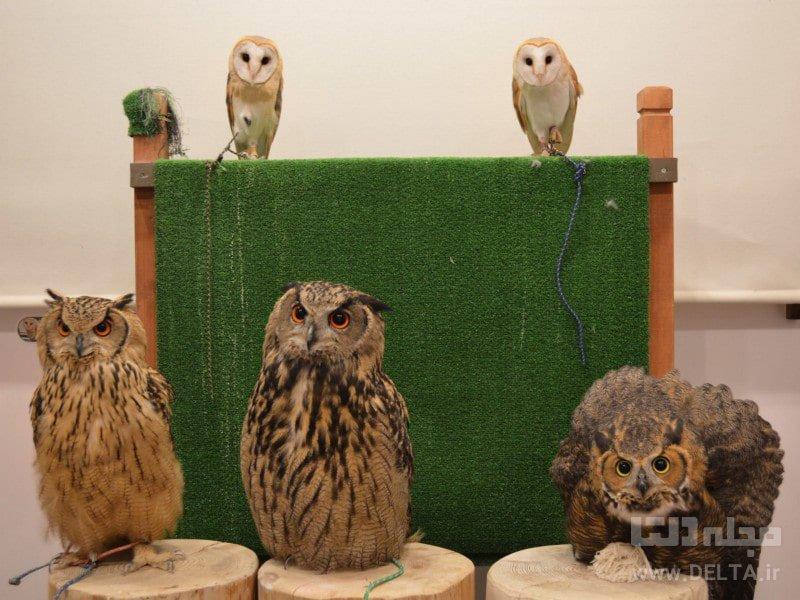 حیوانات بامزه تفریحات توکیو