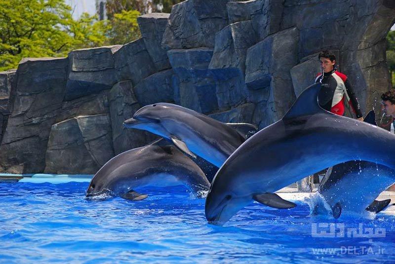 پارک دلفینها دیدنی های باتومی