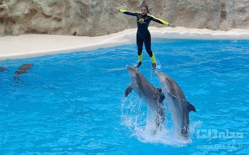 شنا با دلفین ها تفریحات لاکچری دبی