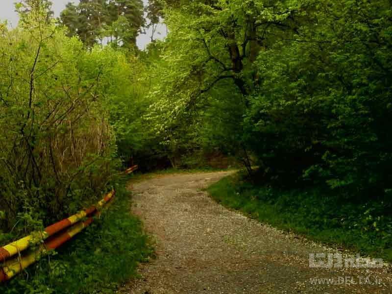 پارک جنگلی دیلیجان